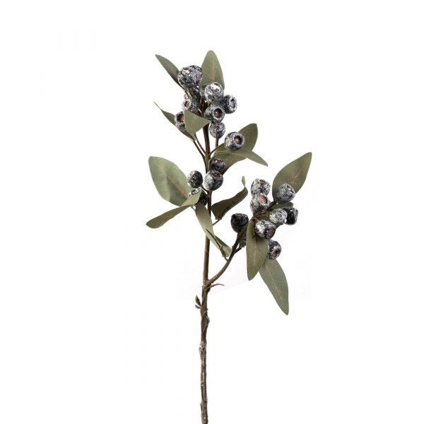 Eucalyptus Berry Stem