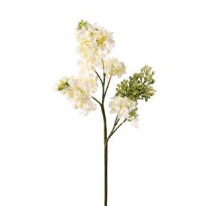 White Lilac Stem